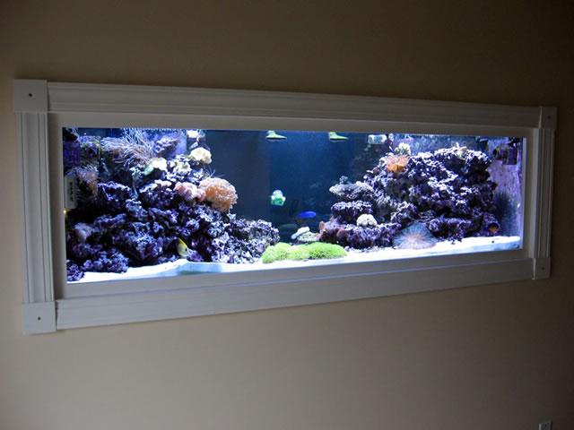 Aquarium Supplies Reef Aquarium