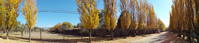 Fall in Mendoza