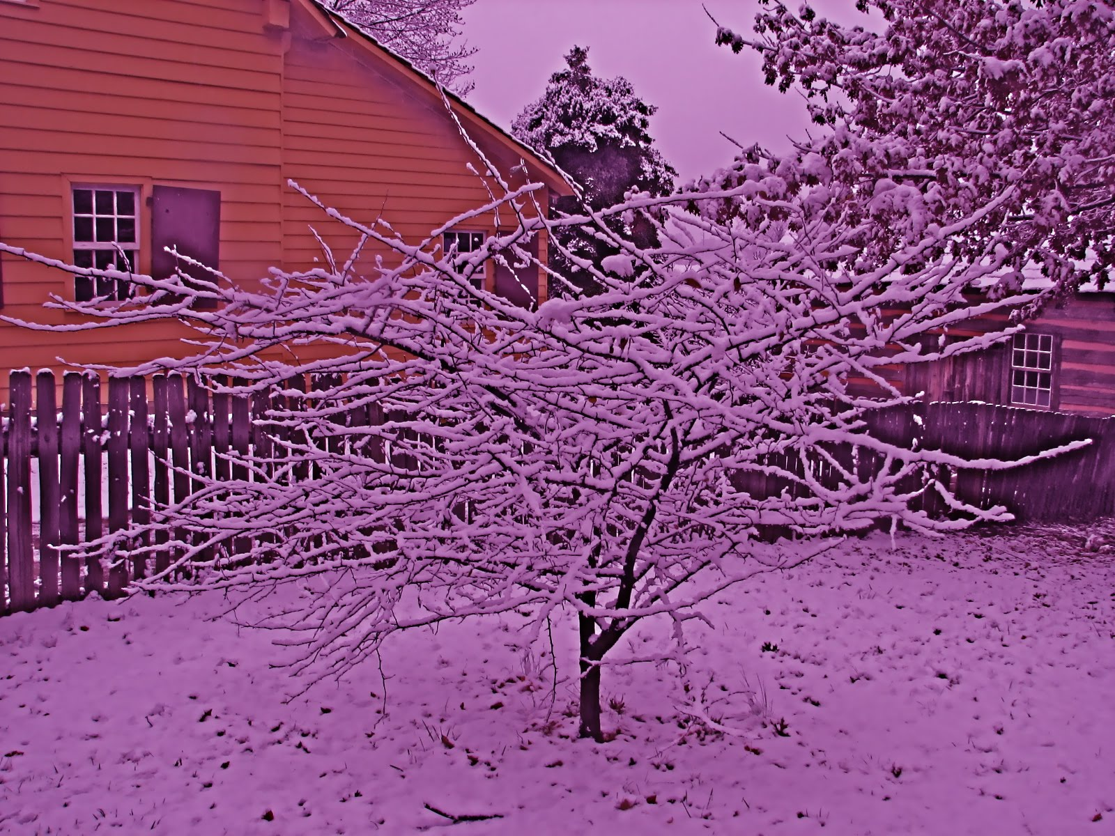 purple snow