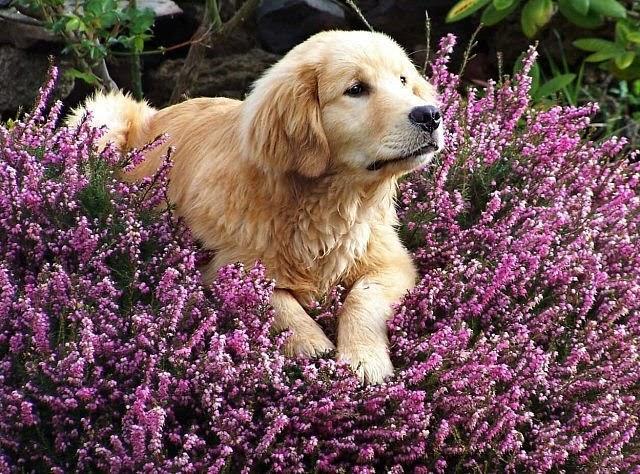 Accesorios para perros perros y aromaterapia for Accesorios para mascotas