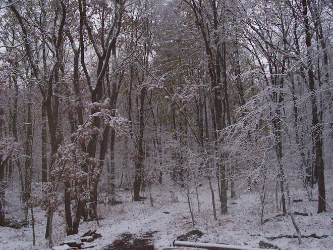 October snow in our woods