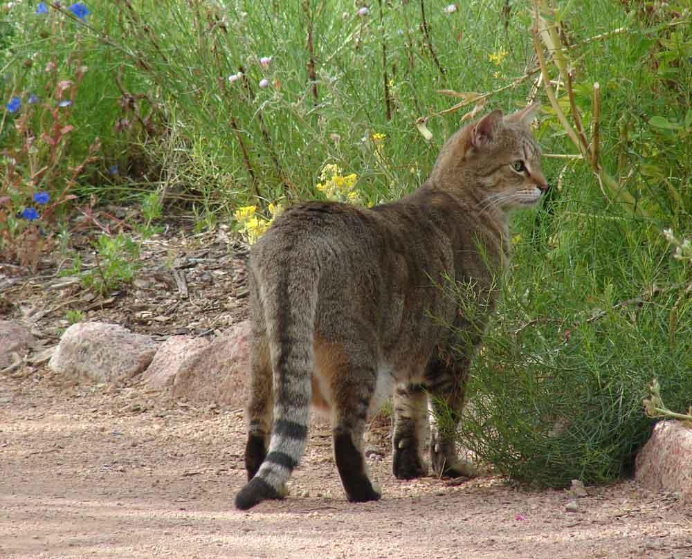 Birding Without Barriers: Spring Has Sprung at Desert Botanical Garden