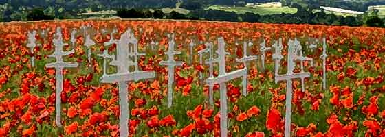 poppy field with white crosses