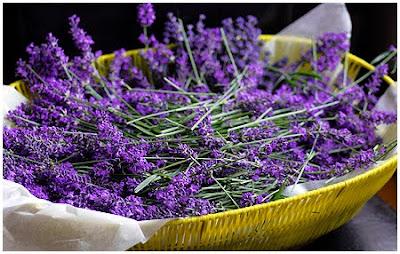 pflanzenkraft an lavendel hab i do. Black Bedroom Furniture Sets. Home Design Ideas