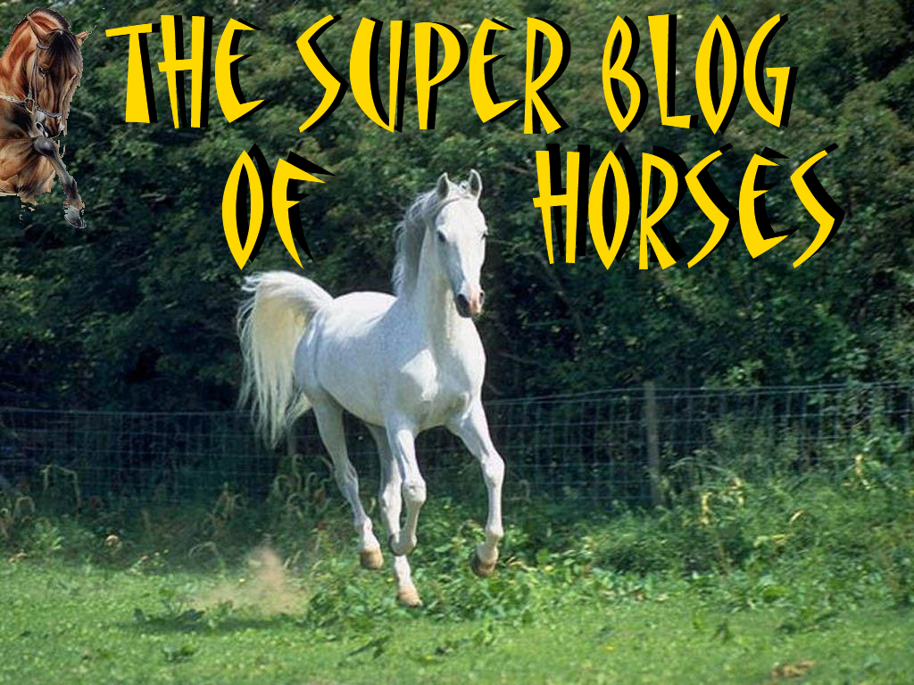 The Super Blog of Horses