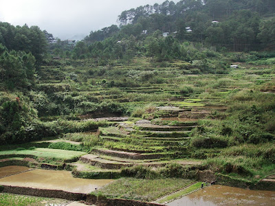 Sagada Rice Terraces Pictures