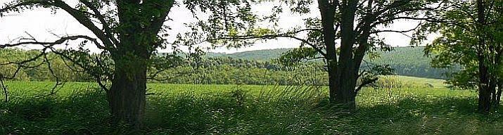 A Hévízgyörki Természetbarát Egyesület honlapja