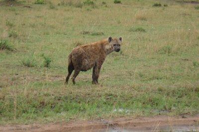 [Hyena.jpg]