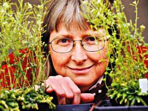 June Medford, Tanaman 'Bunglon' Bisa Mendeteksi Keberadaan Bahan Berbahaya