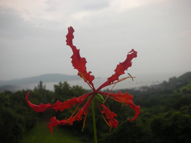 Shrivardhan, Maharashtra 02