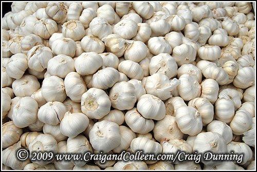 [garlic-500.jpg]