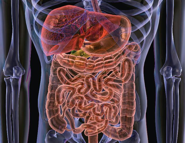 El trasplante de flora intestinal abre nuevas expectativas para el