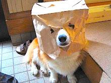 Dogtanion tries to avoid exam