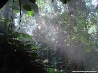 La selva, ¡para acojonarse!