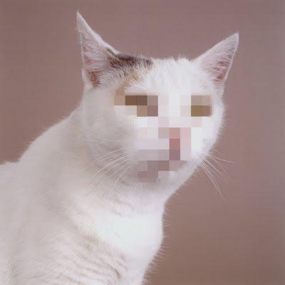 anonymous cat