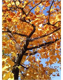 L'autunno che s'innalza all'azzurro cielo