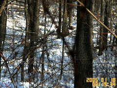 Gobbler in the Winter Woods