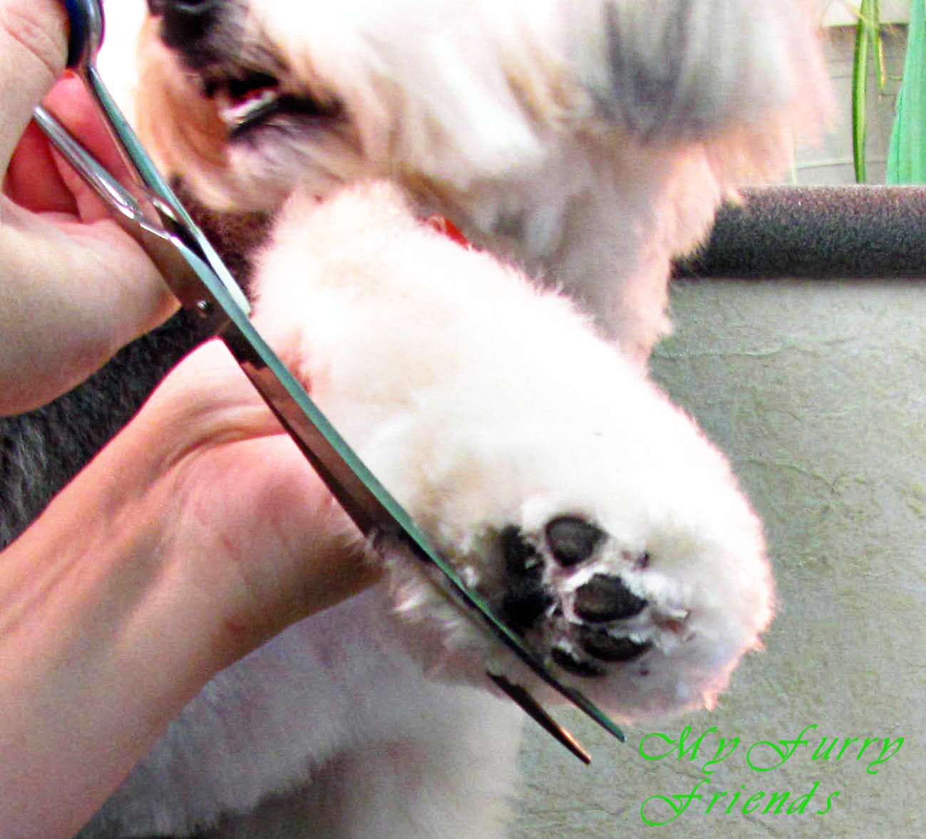 scissoring