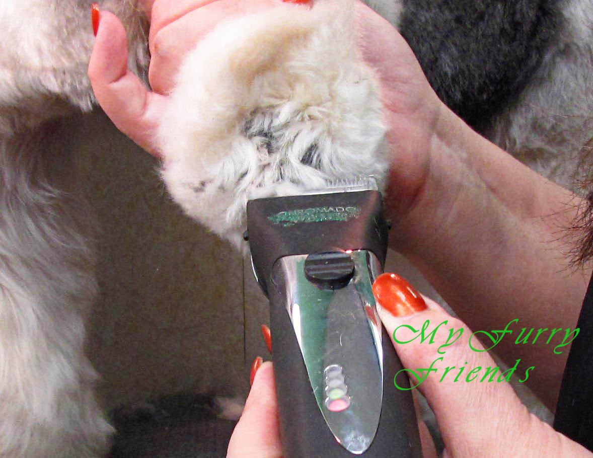 Pet grooming the good the bad amp the furry scissoring feet amp legs