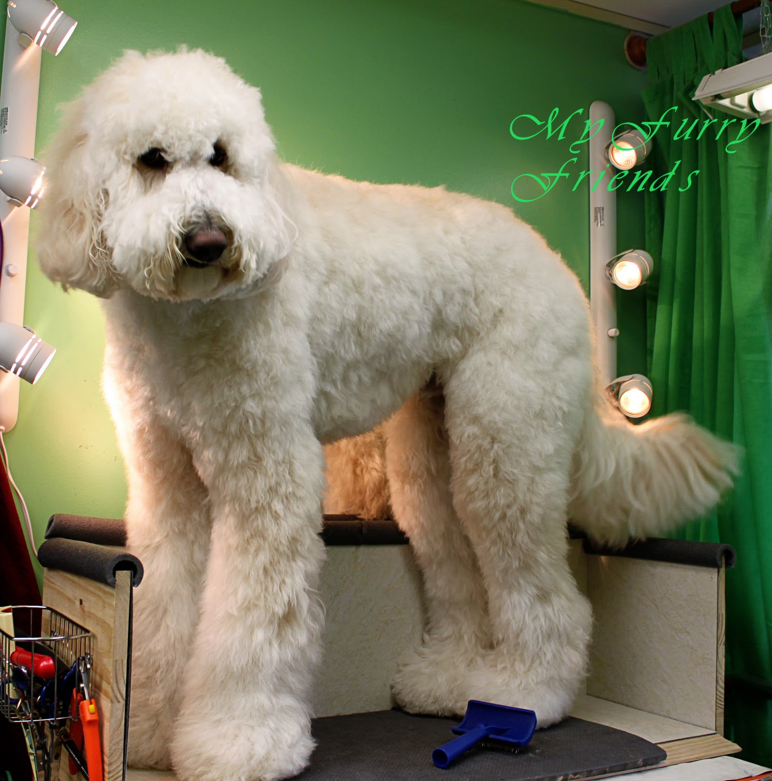 Pet Grooming: The Good, The Bad, & The Furry: Hairy Dogs