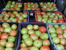 Tomates del 2009