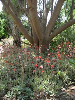 Gradina Botanica din Valencia