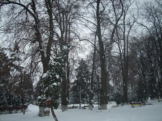 Iarna la Suceava