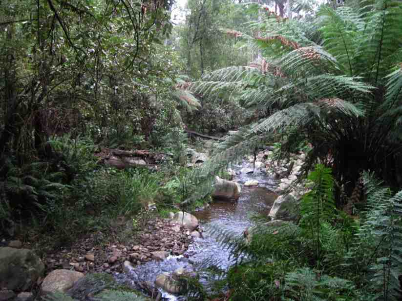 Badger Creek Australia  city pictures gallery : badger creek the badger weir picnic reserve is in the yarra ranges ...