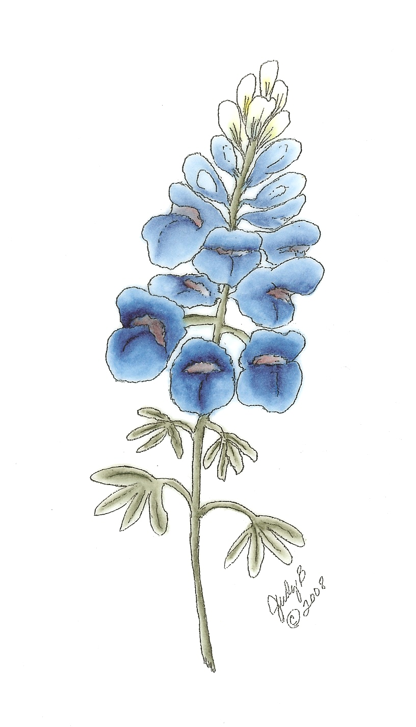 How To Draw Texas Bluebonnet