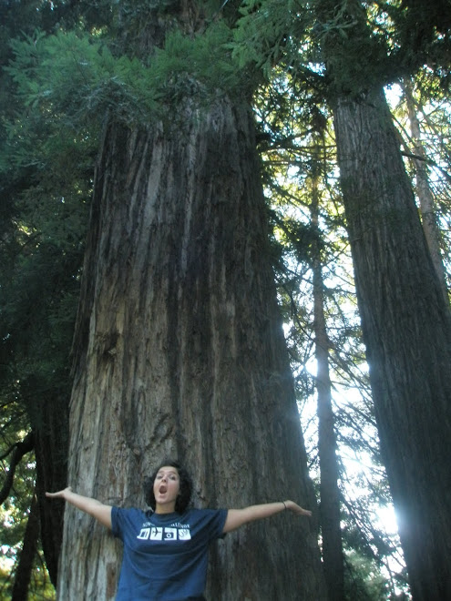 Standing next to a Redwood Tree