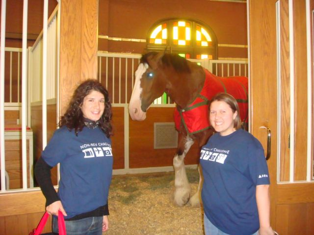 A photo with an AWARD winning Clydesdale.