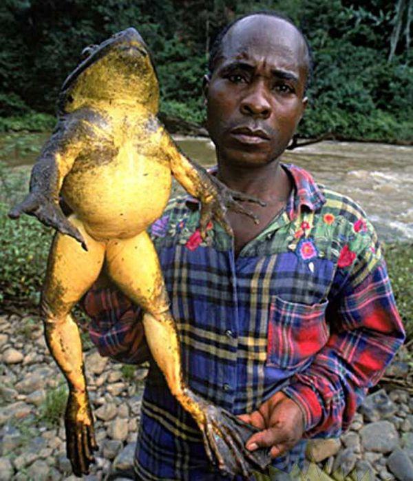 http://4.bp.blogspot.com/_9mJds4xwqsU/TC4OhfXOi3I/AAAAAAAADvw/xGawQynkBSE/s1600/huge_frogs_03.jpg