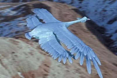 grande planador azul animais do futuro evolução