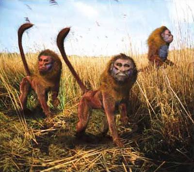 macaco uacari animais do futuro evolução