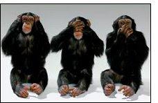 macacos shimps chimpanzés