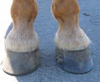 cascos de cavalo