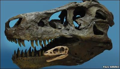 Tyrannosaurus rex - Raptorex kriegsteini
