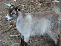 Baby Aslan