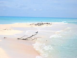 Kayangel Palau Motu Beach