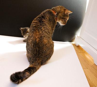 sara jane boyers  mother cat
