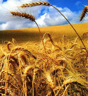 """""""A colheita é grande, mas os trabalhadores são poucos..."""""""