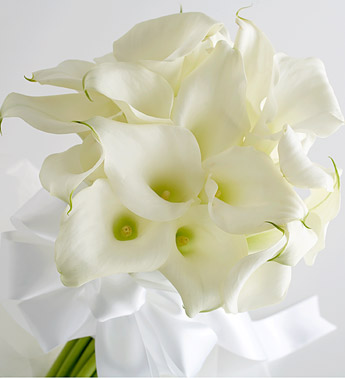 Download calla lily bunch