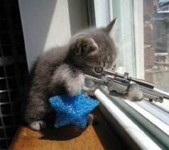 Gato disparando