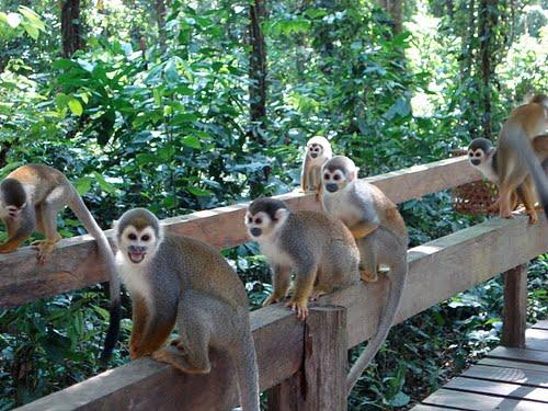 Resultado de imagen para isla de los micos
