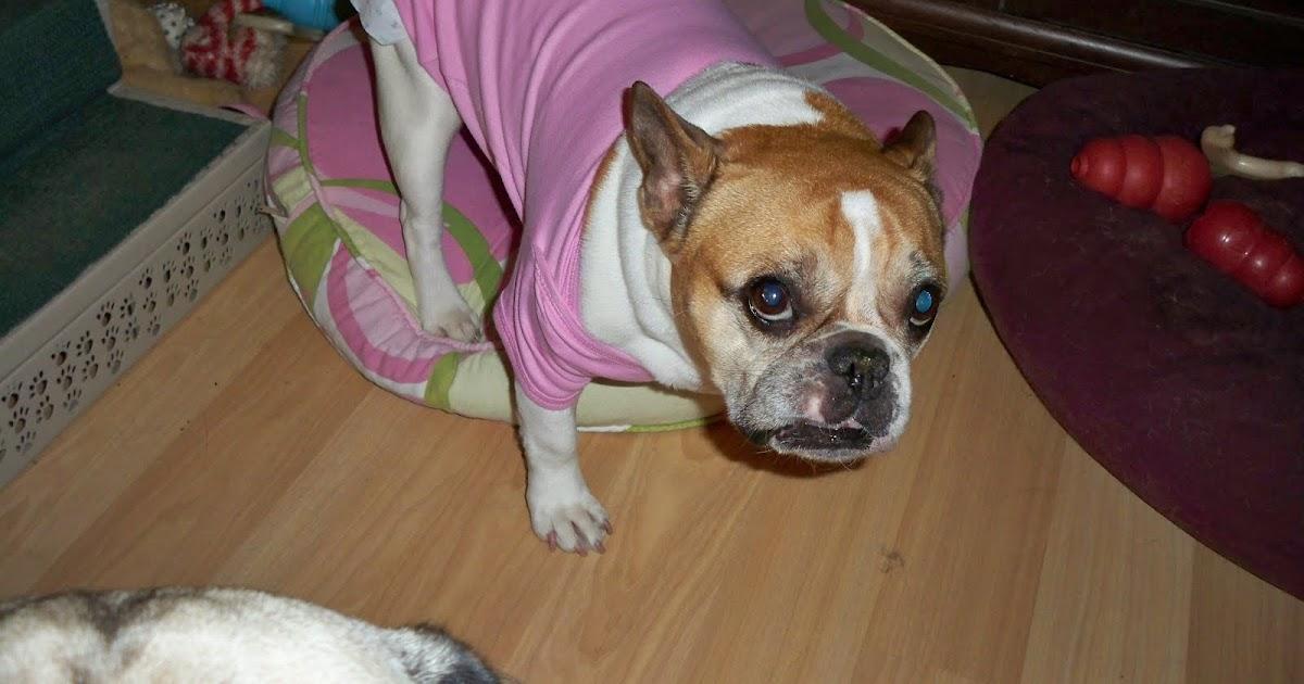 K 9 Solutions Dog Training Inc Doggy Diaper 101