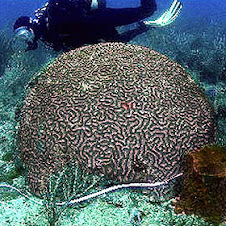 www.Reef-Rescue.org