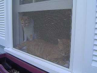 jack and rowdy in the window