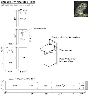 Owl box Birding blog Building a Screech Owl Box