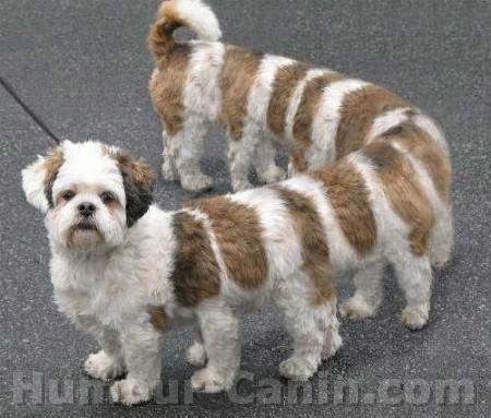 Photos insolites de chiens Chien+rigolo+1