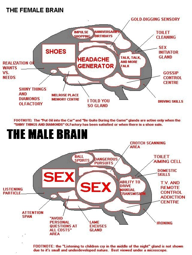 brain sex functions